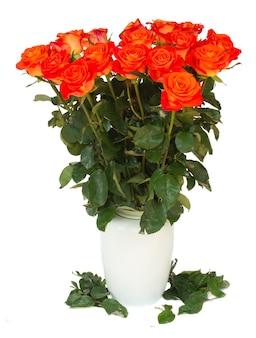 Rosas laranja brilhantes em um vaso isolado