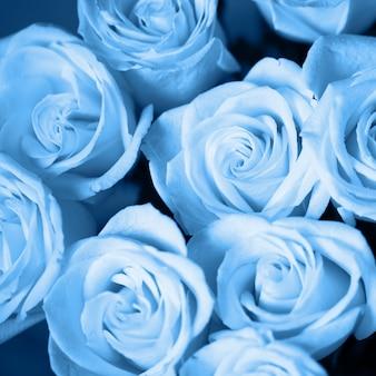 Rosas macias com gotas de orvalho na cor azul clássica, close-up. cor do ano 2020 conceito. foco seletivo. formato quadrado. para cartão de felicitações, mídias sociais, dia dos namorados, dia das mães, dia das mulheres
