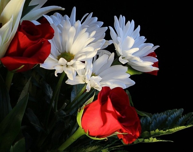 Rosas muito perfumadas flores malmequeres