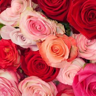 Rosas rosa, laranja e vermelhas