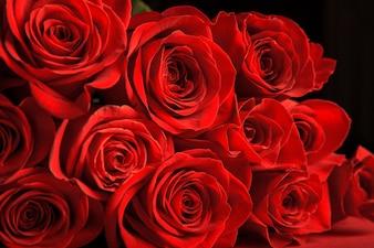 Rosas vermelhas, dia dos namorados
