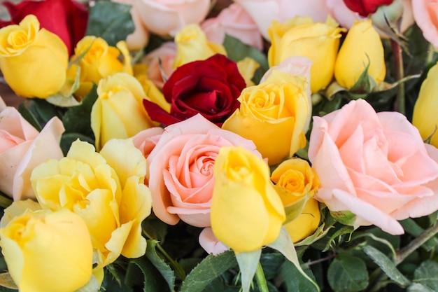 Rosas vermelhas e amarelas
