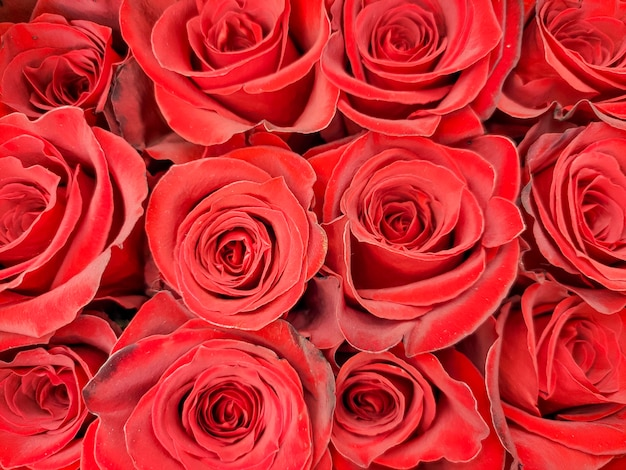 Rosas vermelhas fecham. vendendo rosas na loja. buquês para as férias. aniversário, dia das mães, dia dos namorados, dia das mães.