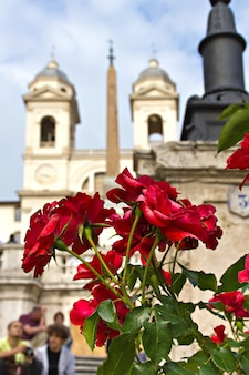 Rosas vermelhas na escadaria da espanha em roma, itália