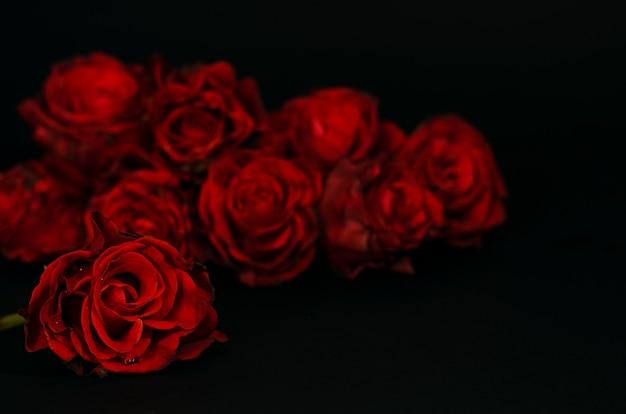 Rosas vermelhas na escuridão.