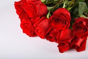 Rosas vermelhas no fundo branco, dia dos namorados