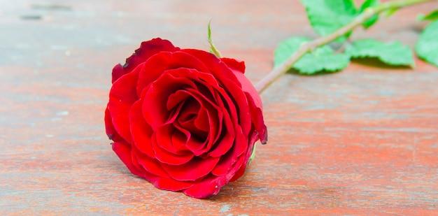 Rosas vermelhas para alguém que você ama na temporada dos namorados.