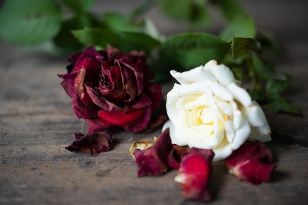 Rosas vermelhas secas no fundo de madeira grunge