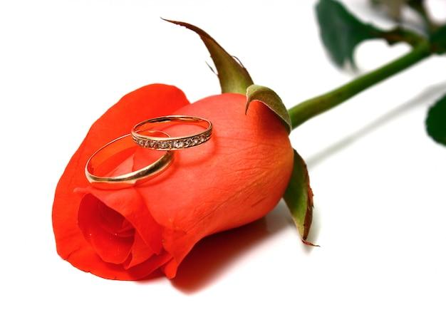 Rose e alianças de casamento