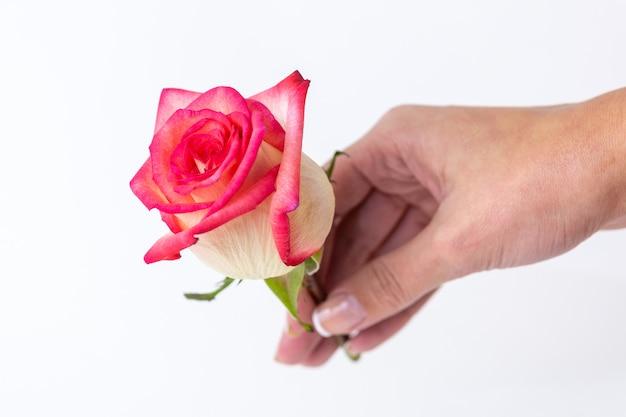 Rose na mão da mulher para o dia dos namorados