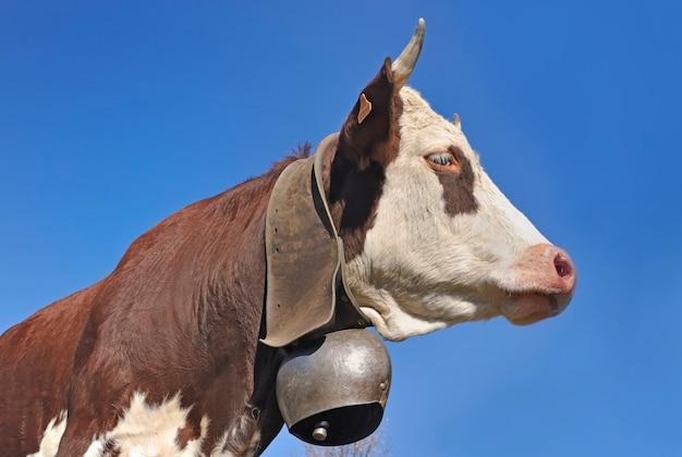 Rosto de vaca alpina marrom e branca usando um sino no céu azul