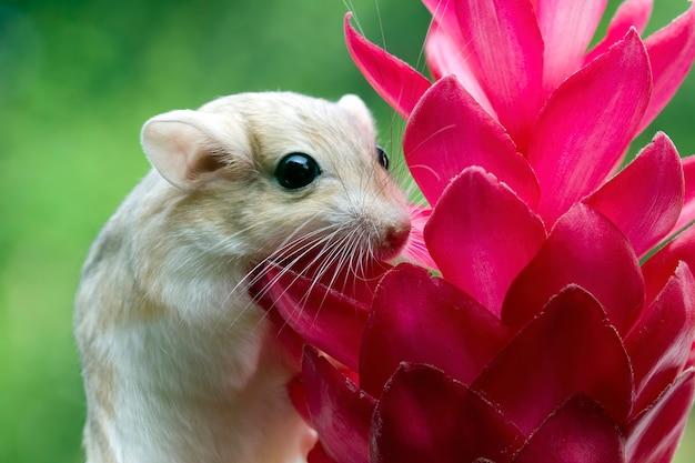 Rosto fofo de rato gerbilo