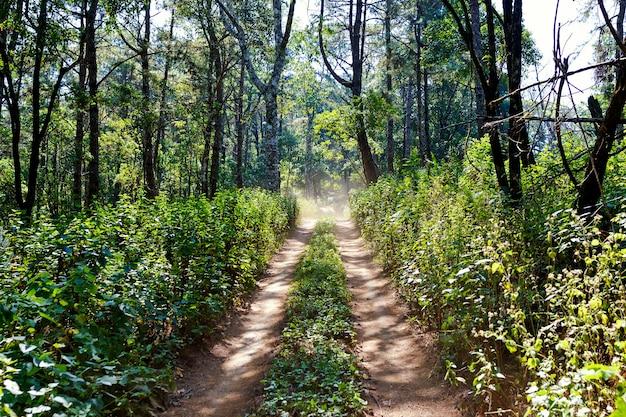 Rota de viagem na floresta da tailândia
