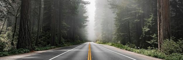 Rota panorâmica na floresta nacional de redwood, na califórnia, eua