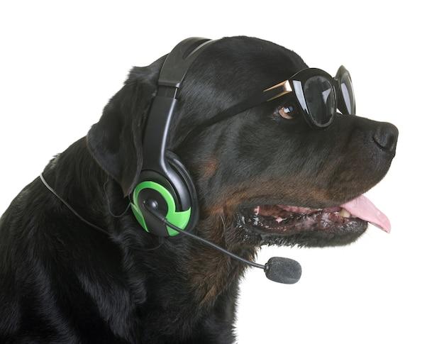 Rottweiler e fones de ouvido
