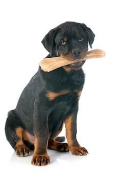 Rottweiler e osso