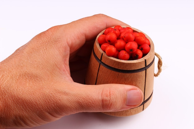 Rowan em um barril na mão em uma superfície branca