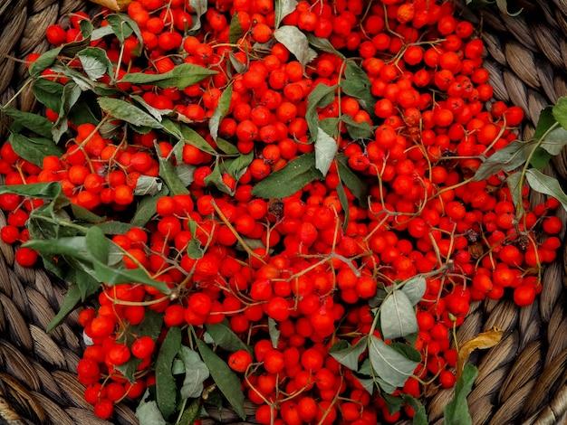 Rowan vermelho em uma cesta de vime na serapilheira