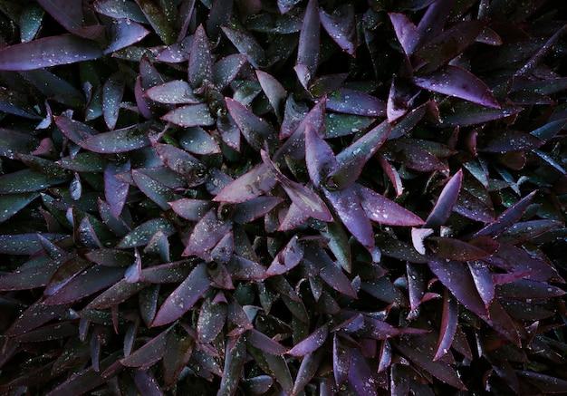 Roxo profundo, folhas, padrão, e, gota dágua, ligado, folhas, para, beleza, fundo