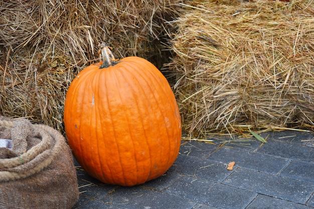 Rua decoração de outono com uma abóbora. abóbora grande laranja no cenário da loja.