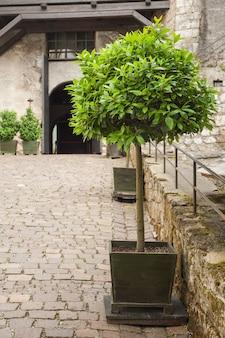 Rua estreita na velha cidade austríaca