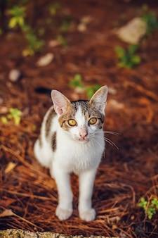 Rua gato branco olhando para a câmera