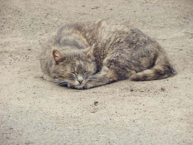 Rua gato de rua. gato vadio sem-teto na rua rústica