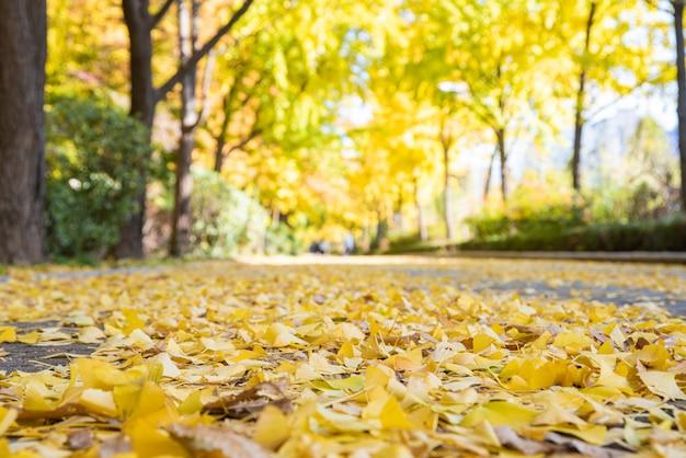 Rua outono com folhas amarelas. parque olímpico de seul, na coréia do sul.