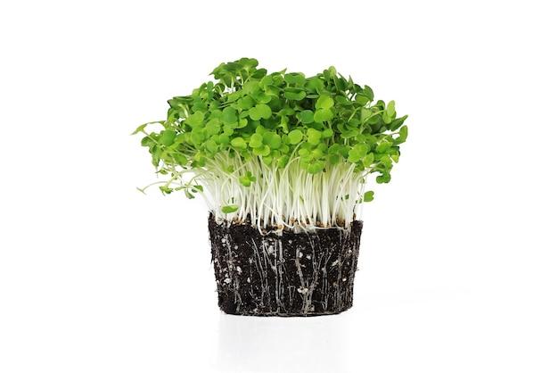 Rúcula microgreens orgânica isolada no fundo branco alimentação saudável e vegana