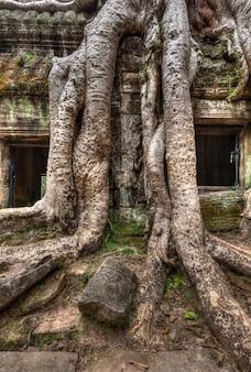 Ruínas antigas e raízes de árvores, templo ta prohm, angkor, camboja