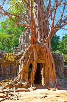 Ruínas antigas entrelaçadas por árvores em angkor wat, camboja