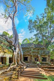 Ruínas do templo ta prohm entrelaçadas por raízes gigantes em angkor wat, no camboja