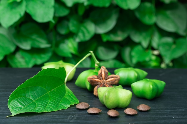 Sacha inchi, fruto de sementes de cápsula fresca de amendoim sacha-inchi