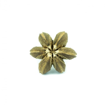 Sacha inchi semente de amendoim isolada no branco
