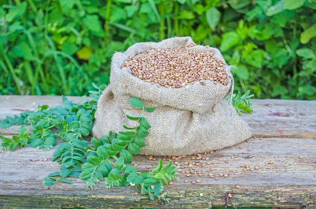 Saco de aniagem com lentilhas
