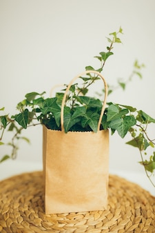 Saco de compra de papel marrom e bege com a planta da hera na sala brilhante moderna,