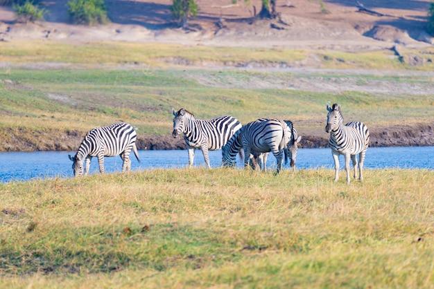 Safari da vida selvagem nos parques nacionais africanos.