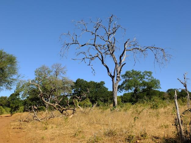 Safari no parque nacional de chobe, botswana, áfrica