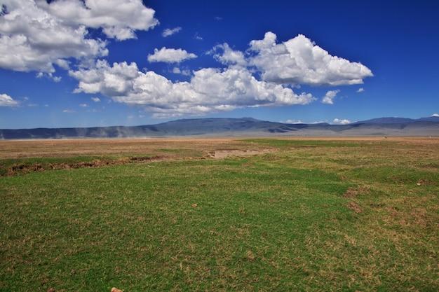Safari no quênia e tanzânia, áfrica