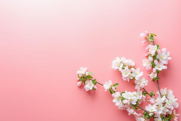 Sakura florescendo, flores da primavera em rosa