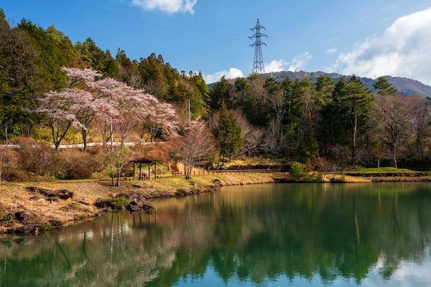 Sakura ou cherry blossom perto da lagoa, vale de kiso