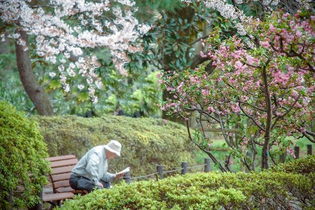 Sakura rosa é uma flor bonita, floresça no japão.