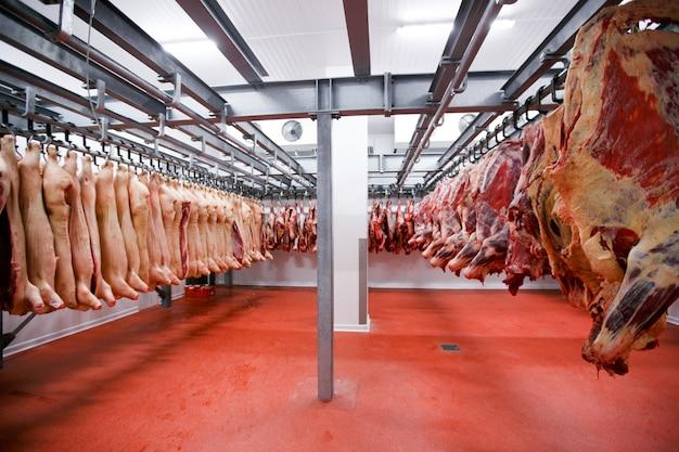 Sala com geladeira grande com carne fresca crua picada pendurada e arrumada em uma grande geladeira na indústria de carne da geladeira.