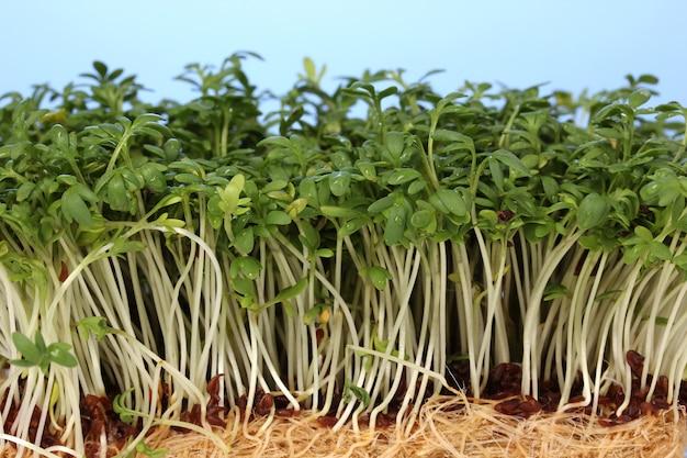 Salada de agrião fresca no azul