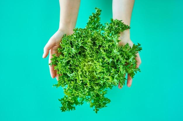 Salada de alface verde fresca em mãos isoladas