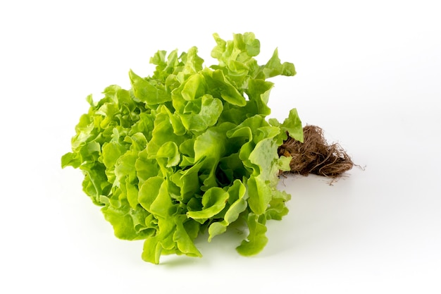Salada de carvalho verde em um fundo branco, vista lateral.