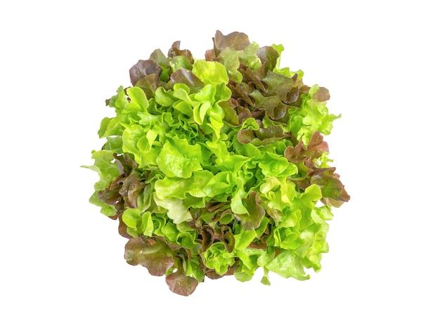Salada de carvalho vermelho carvalho verde fresco orgânica isolada no fundo branco. vista do topo.