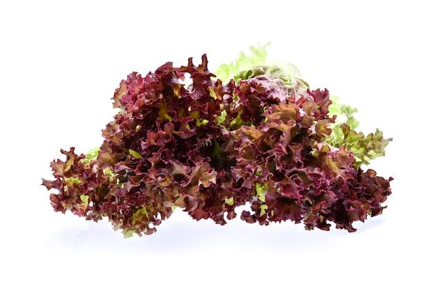 Salada de coral vermelho no fundo branco