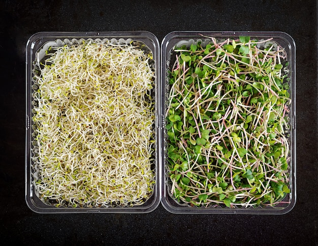 Salada de microgreens mistura fresca, vista superior