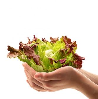 Salada fresca nas mãos